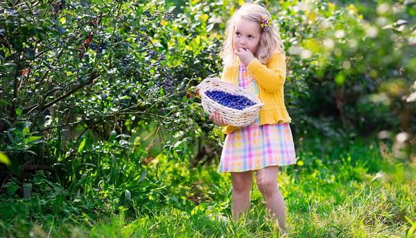 Фото голубики садовой и ее полезные свойства
